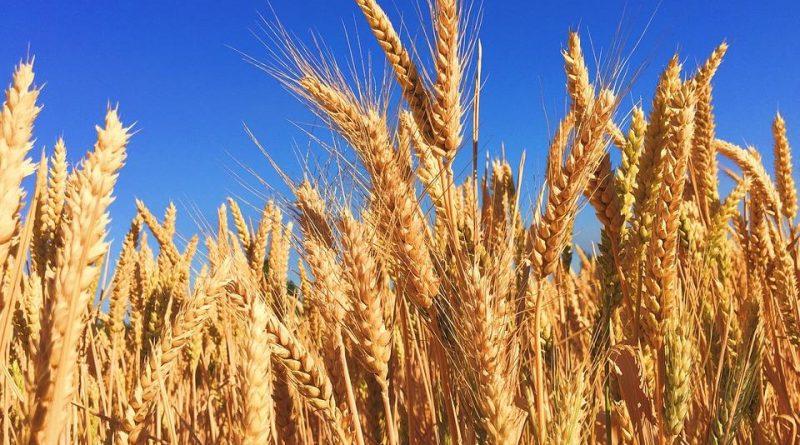 Пострадавшие аграрии Чувашской Республики получат компенсацию