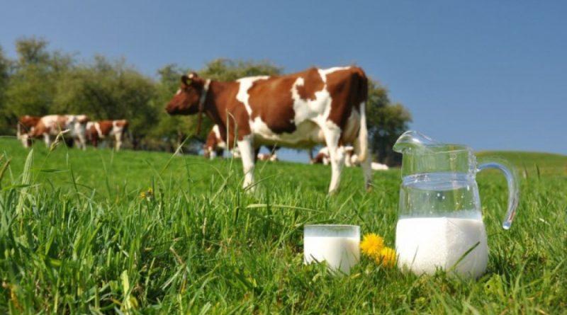 Александр Ткачев предложил Белоруссии искать новые рынки сбыта молока