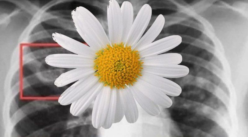 Белая ромашка – символ чистого дыхания