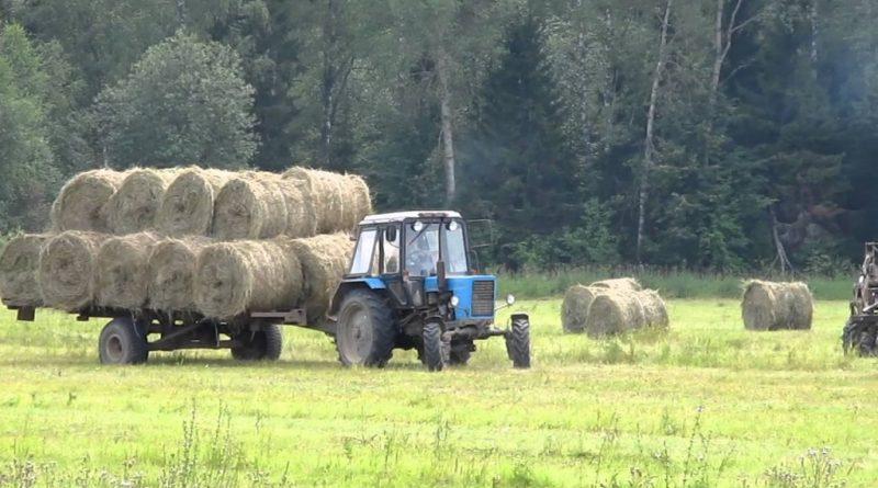 В Алатырском районе идет заготовка кормов