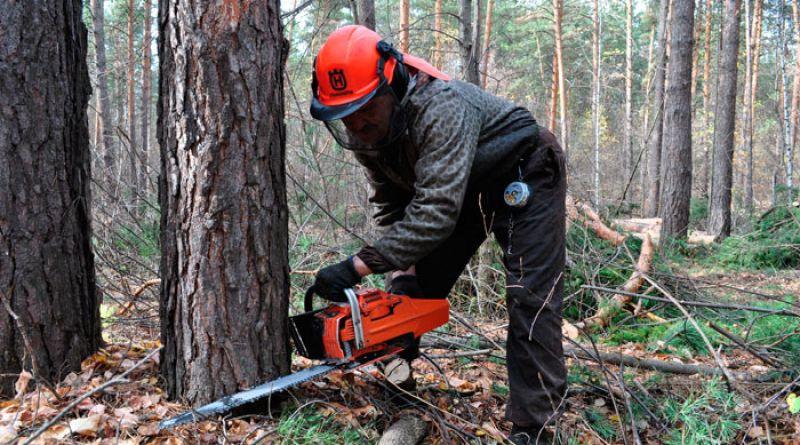 В Алатыре пройдет республиканский конкурс «Лучший вальщик леса»