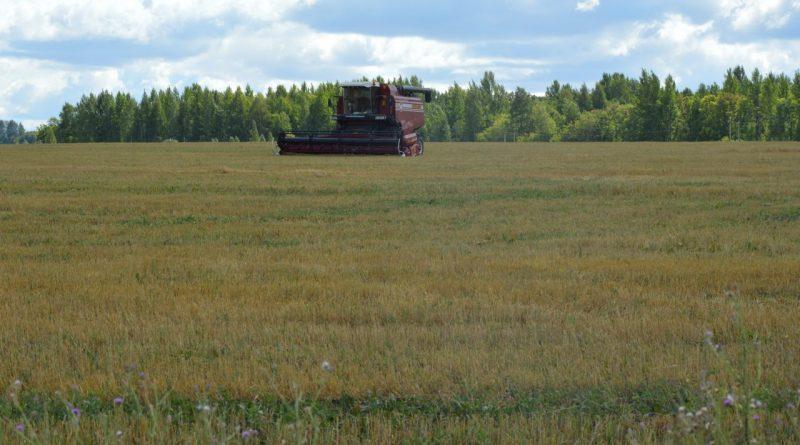 Близится к завершению уборка зерновых