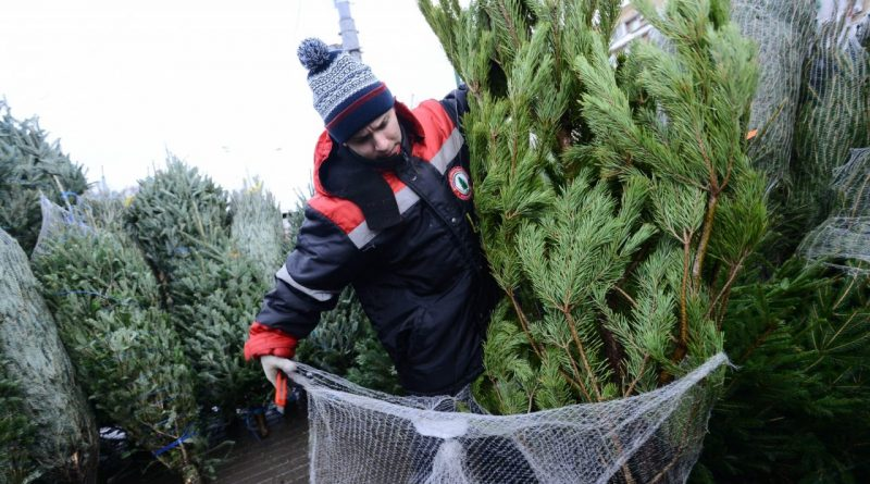 Защитим новогодние ёлки