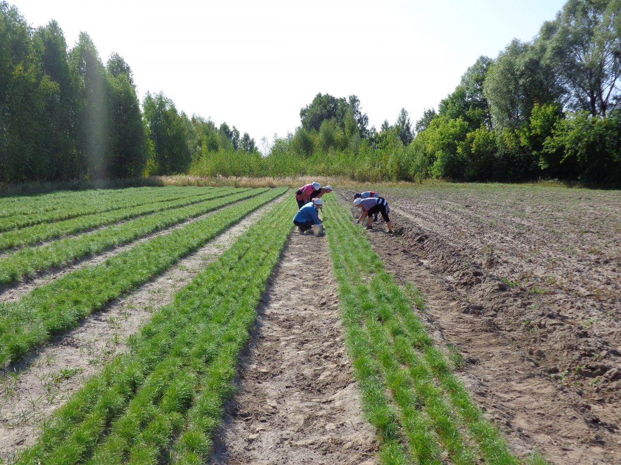 Точки роста: Алтышевское сельское поселение 1