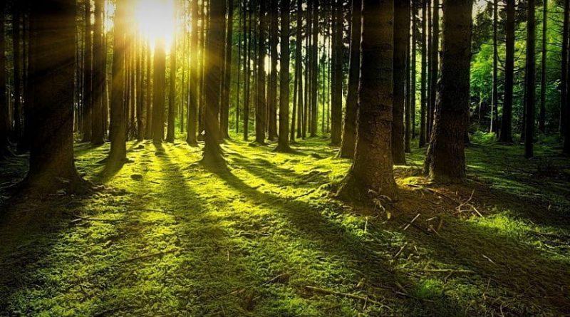 Лес-бесценный дар природы