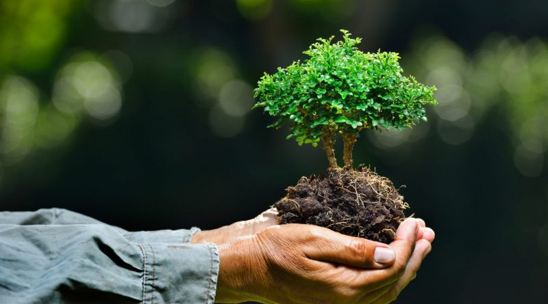 Еще одна статья в Конституции будет посвящена вопросам в экологии