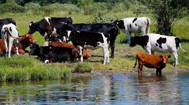 Закупочные цены на молоко от населения в Чувашии на 24% выше прошлогоднего уровня